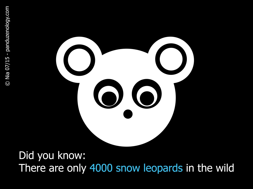 Pandu snow leopard 7 2015.jpg